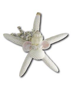 KKS101:Finger Starfish with Shells